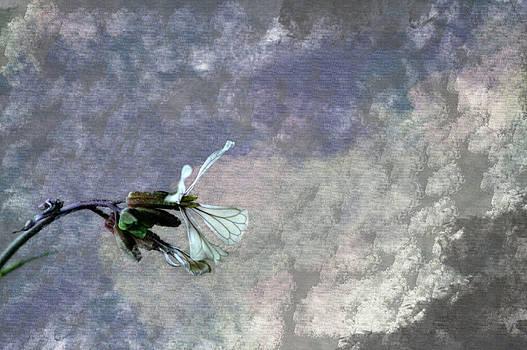 Deborah Hall Barry - Weeds in Bloom