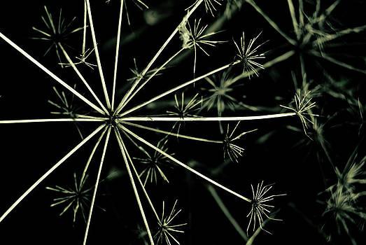 Weeds by Grebo Gray