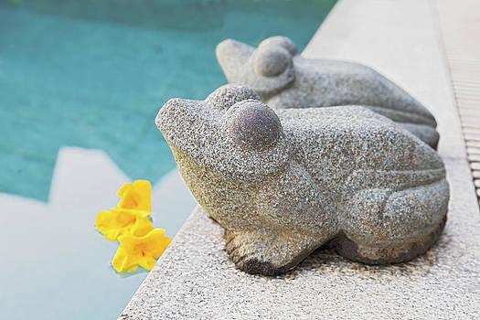 Kantilal Patel - West facing frogs Calibrachoa