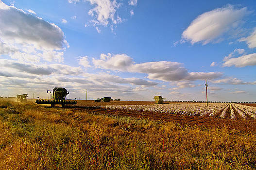 West Texas Cotton Harvest by Robert Hudnall
