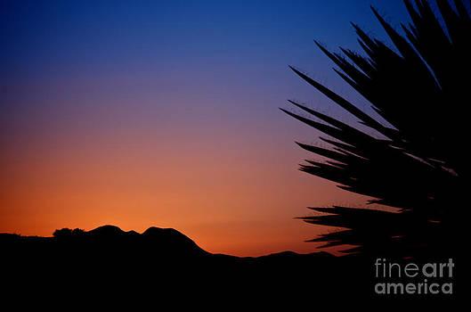 Sherry Davis - West Texas Sunset