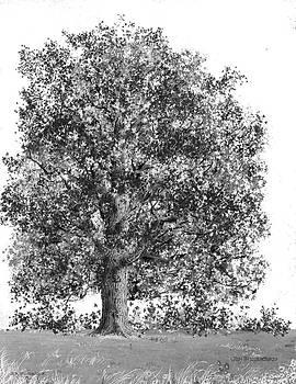 Jim Hubbard - West Virginia-Sugar Maple