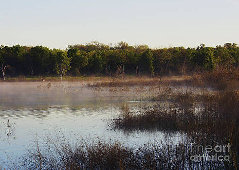 Wetland Morning by Diana Cox