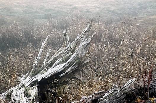 Wetlands Driftwood by Wanda Jesfield