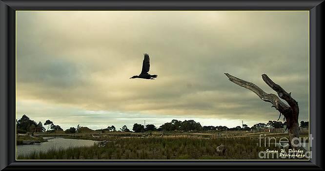 Wetlands by James  Dierker