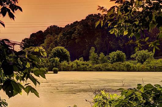 Wetlands Summer Scene by Gordon H Rohrbaugh Jr