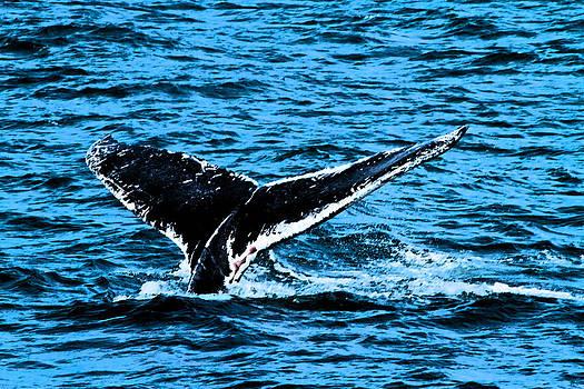 Karol Livote - Whale Dip