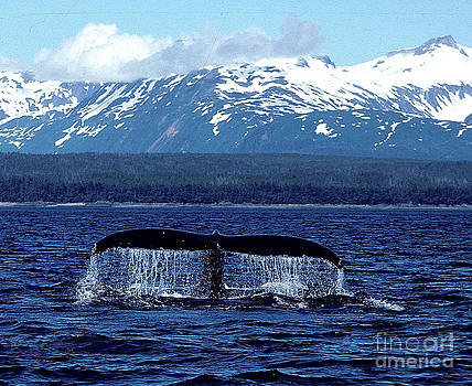 Whale of a tail by Absolute Photography