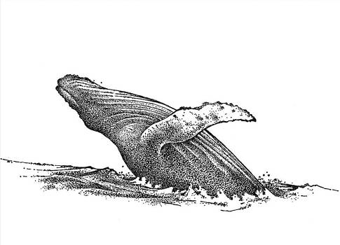 Whale by Rob M Harper