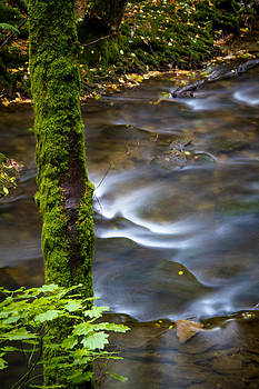 Jonathan Hansen - Whatcom Creek in Fall 3