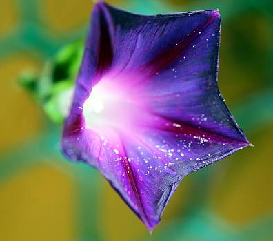 what's the story Morning Glory by Shiladitya Sinha