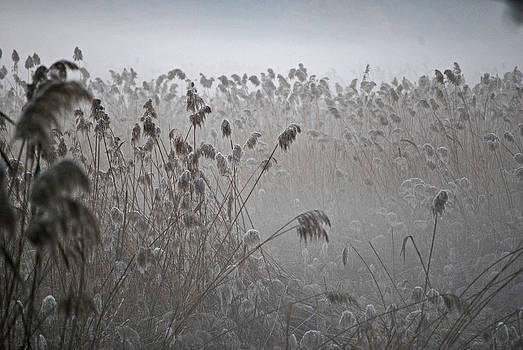 Michelle Cruz - Wheat in the Morning Mist