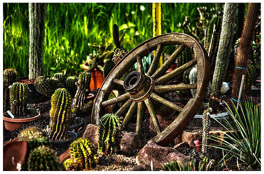 Wheel and Cactus  by Thomas Kessler