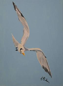 Wheeling Gull by Tony Baker