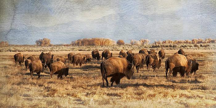 Where the Buffalo Roam by Judy Neill
