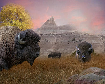 Terry Eve Tanner - Where the Buffalo Roam