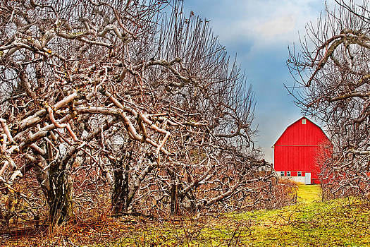 Where the Orchard Ends by Amber Schenk