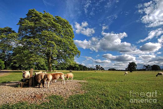 Yhun Suarez - Where The Sheeps Have No Name