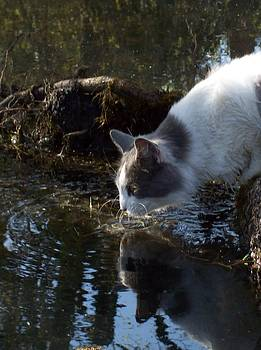 Whiskers In The Water by Pamela Roberts-Aue