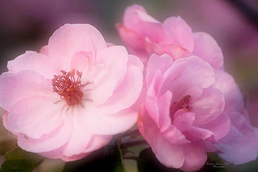 Darlene Bell - Whisper Pink