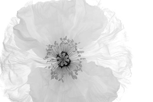 Whispers Of Crinoline by Nyla Alisia
