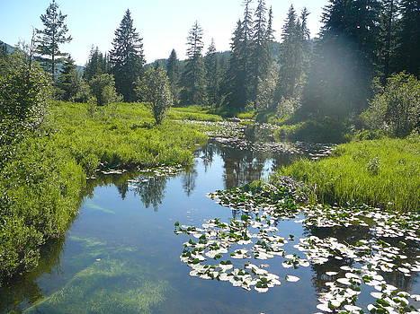 Whistler Creek by Julieann McGuinness