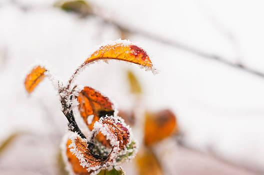 White and snow by Iulian Mofteescu