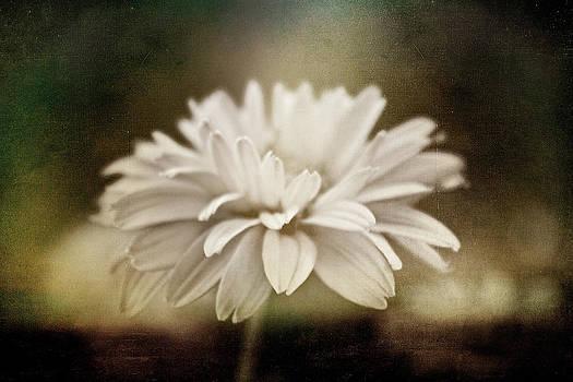 White Beauty by Cindy Grundsten