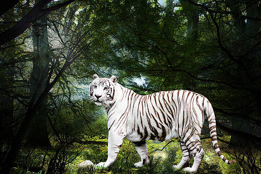 White Bengal by Elizabeth Hart