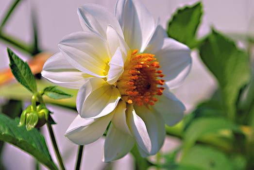 Michelle Cruz - White Blooms