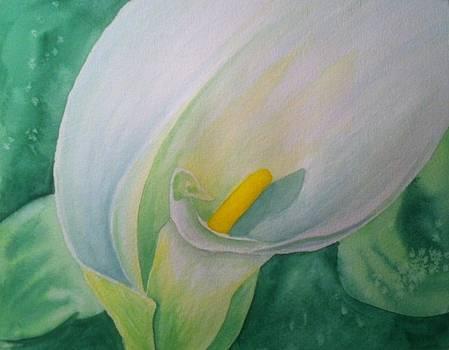 White Calla Lily by Stephanie Reid