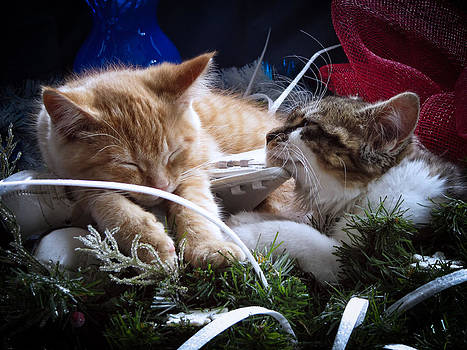 Chantal PhotoPix - White Christmas w Two Kittens Sleeping - Orange Tabby Cat and Maine Coon Kitty Resting on Ice Skates