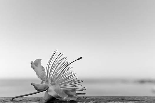 White by Daniel Kulinski