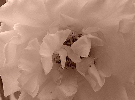 White Delicate Petals by LDPhotography Stephanie Armstrong