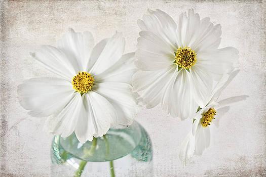 White Delight by Sandra Pledger