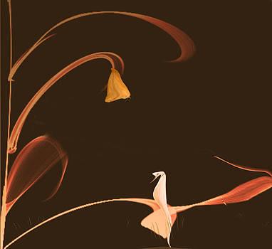 White Dove by Virginia Dillman
