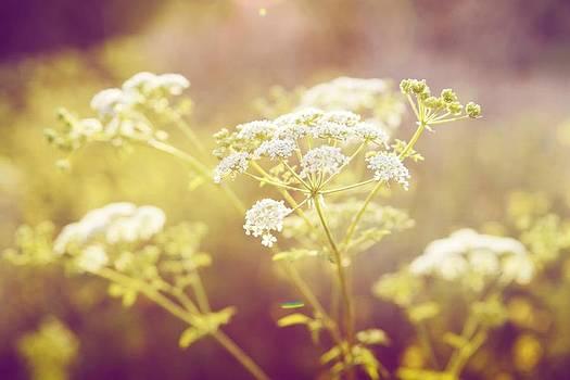 White Flower by Jacquie Waldman