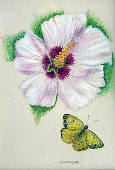 White flower by Linda Pope