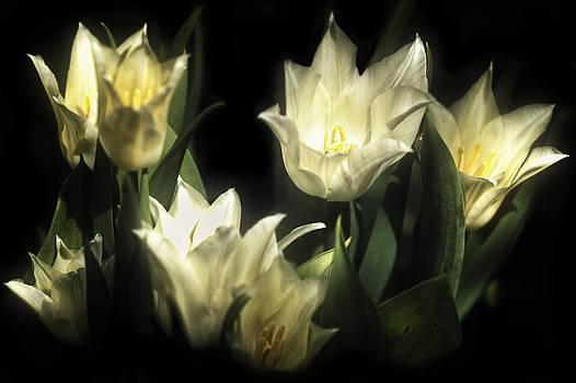 White Flower by Stuart Deacon