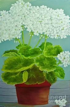 Peggy Miller - White Geraniums
