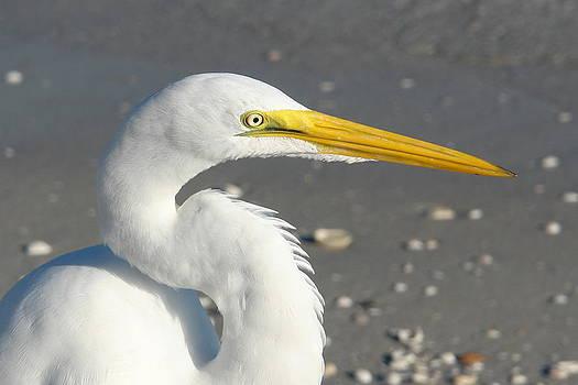 Carmen Del Valle - White Heron Glare