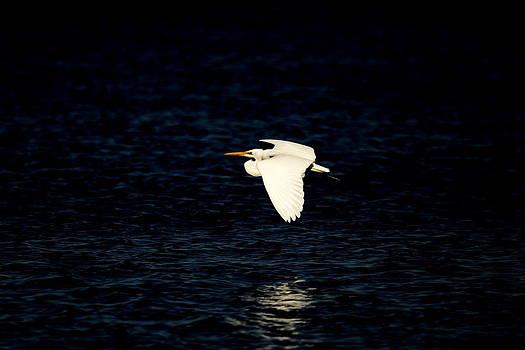 Noel Elliot - White Heron