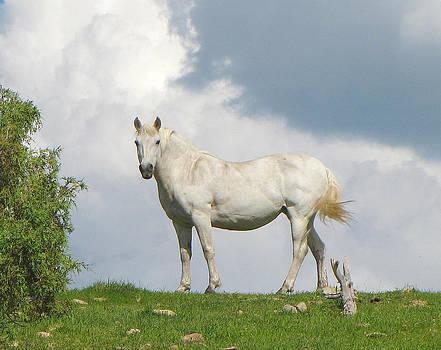 White Horse by FeVa  Fotos
