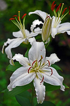 Michelle Cruz - White Lily