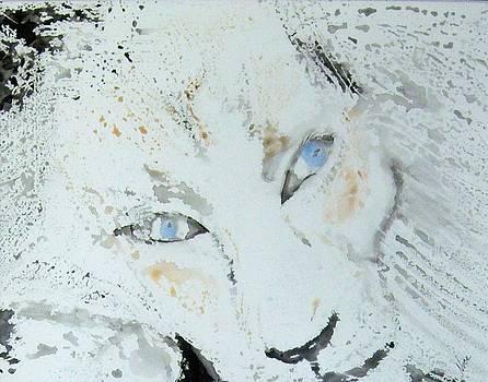 White Lion by Nancy Nuce