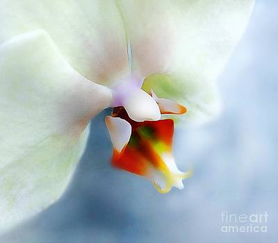 White Orchid Dream by Kevin Moore