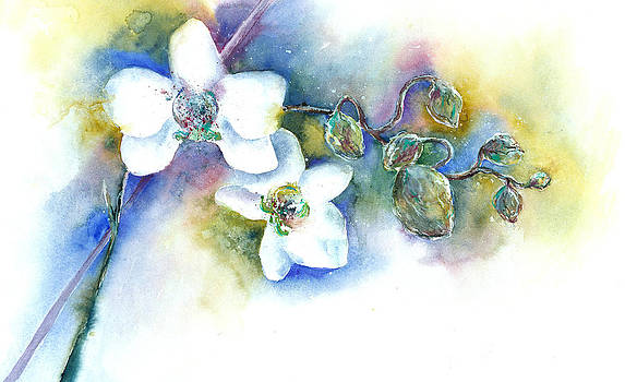 White Orchid by Jitka Krause