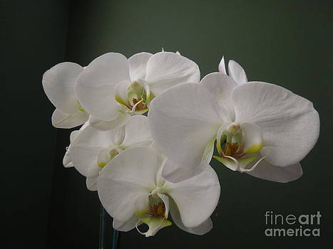 White Orchid by Mario Fabian
