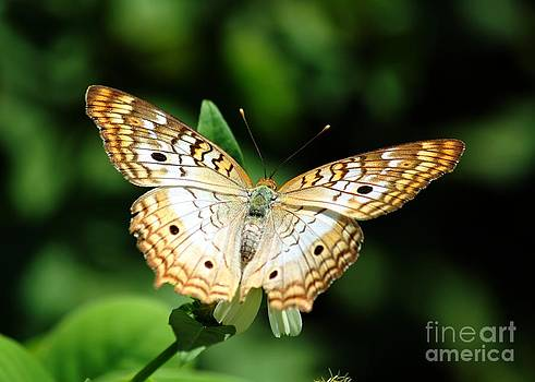 White Peacock Butterfly by Theresa Willingham