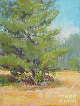 White Pine Field by Marsha Savage